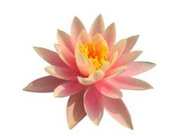 lotus_wiktor.jpg